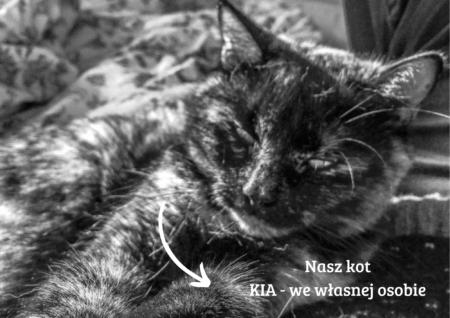Nasz kot Kia – we własnej osobie